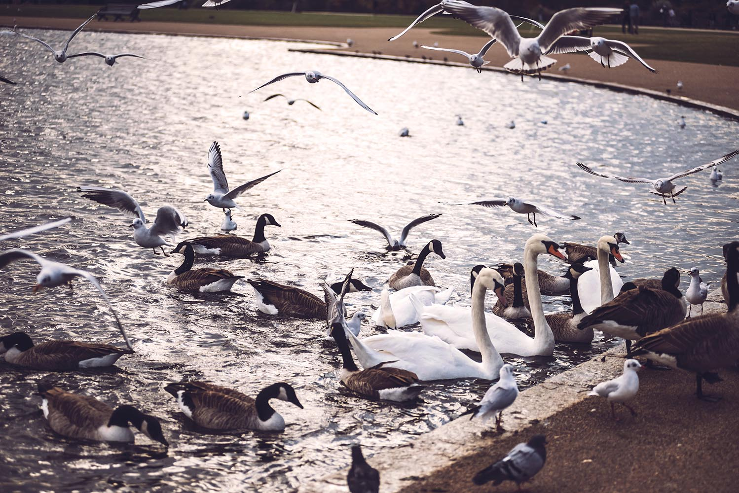 A lot of birds in park