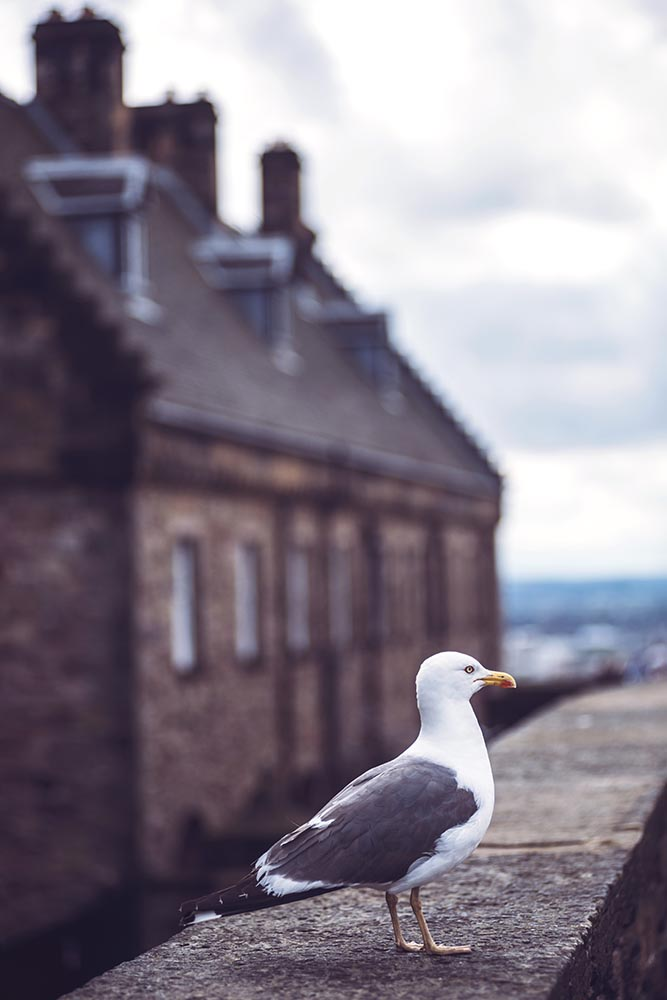 Seagull sitting on parapet