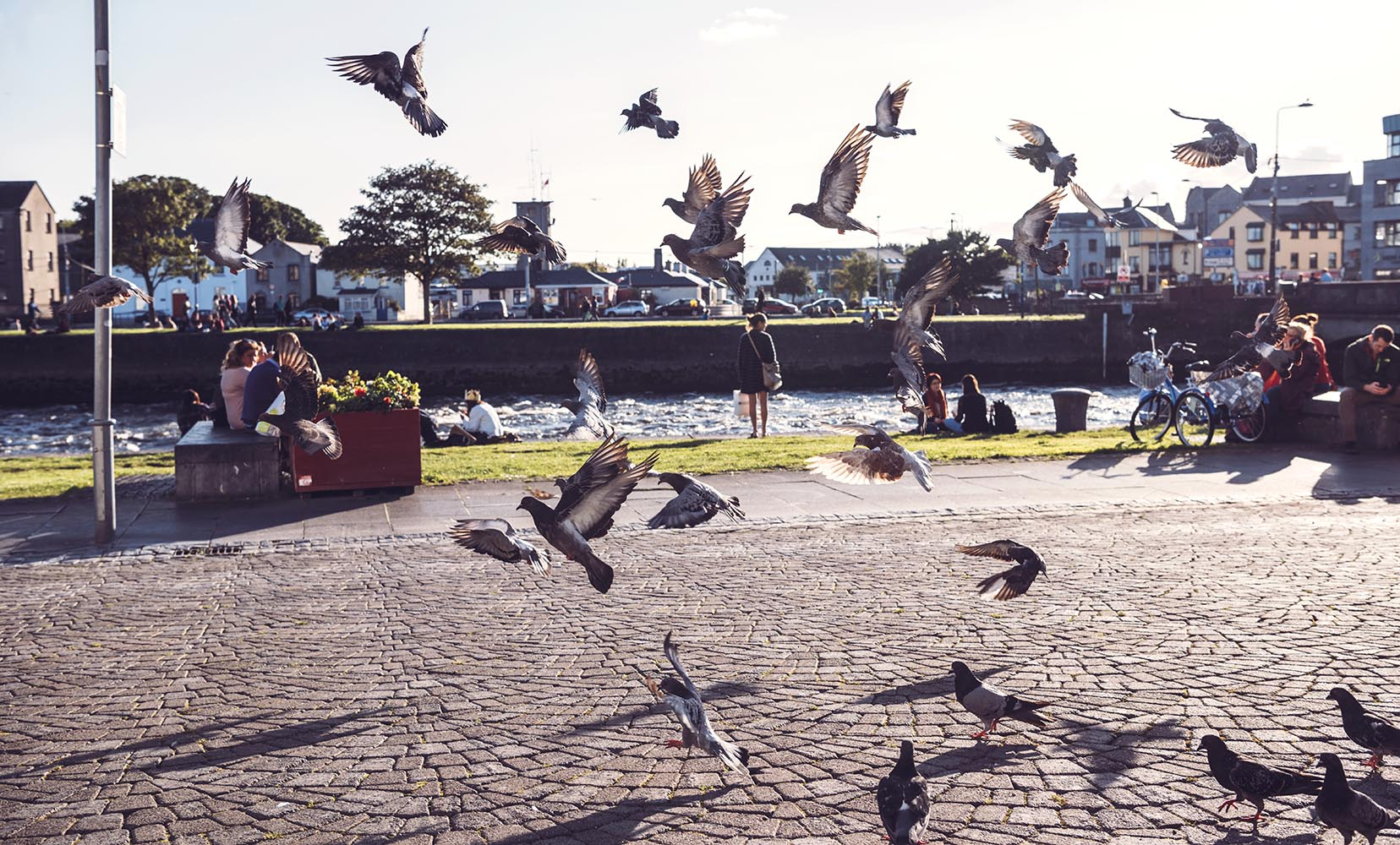 Pigeons taking off from ground