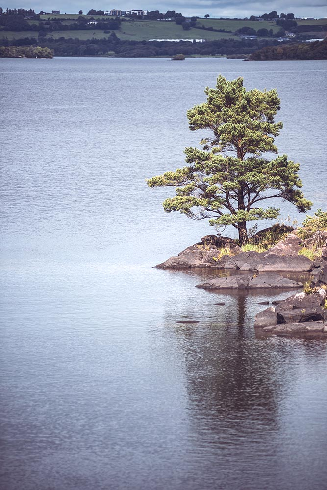 Lonely tree on rocky shore of lake